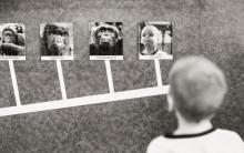 Приматы и люди
